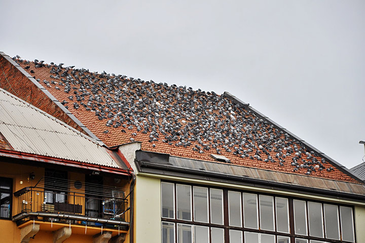 A2B Pest Control are able to install spikes to deter birds from roofs in Bridgend.